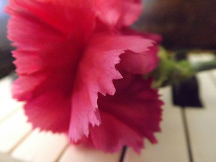 A Soft Pink Melody - Lorna Kay
