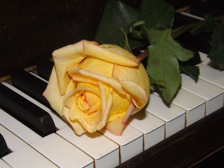 A Song From A Rose - Lorna Kay