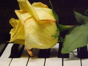 Melody Of A Rose