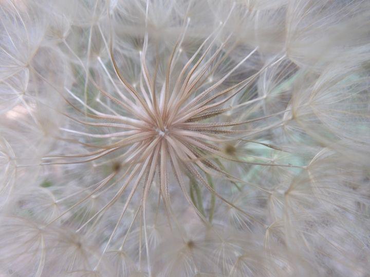 Inside A Wish - Lorna Kay