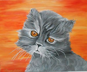 DREAMY EYES PERSIAN CAT