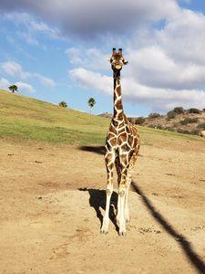 Giraffe - Kaela Renee