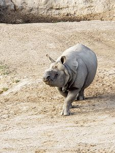 Male Rhinoceros