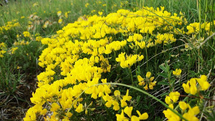 yellow flowers - jamie-art