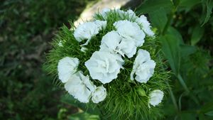 white flowers in green