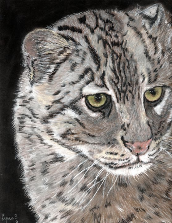 FISHING CAT - DREAMZ-ART