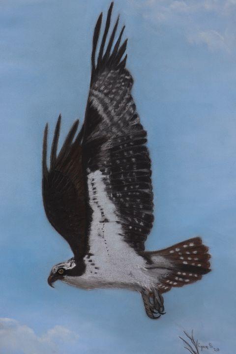 OSPREY FLYING - DREAMZ-ART
