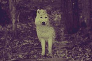 wolf spirit - kesurukun