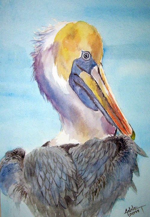 A Pelican's Portrait - Anne's ARTS