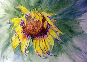 Sunflower Splash