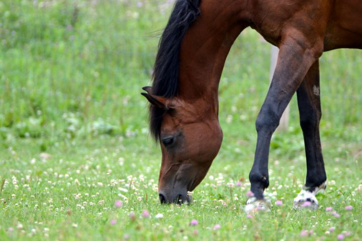 Caspian Horse - Drgnfly Designs