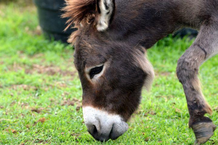 Donkey - Drgnfly Designs