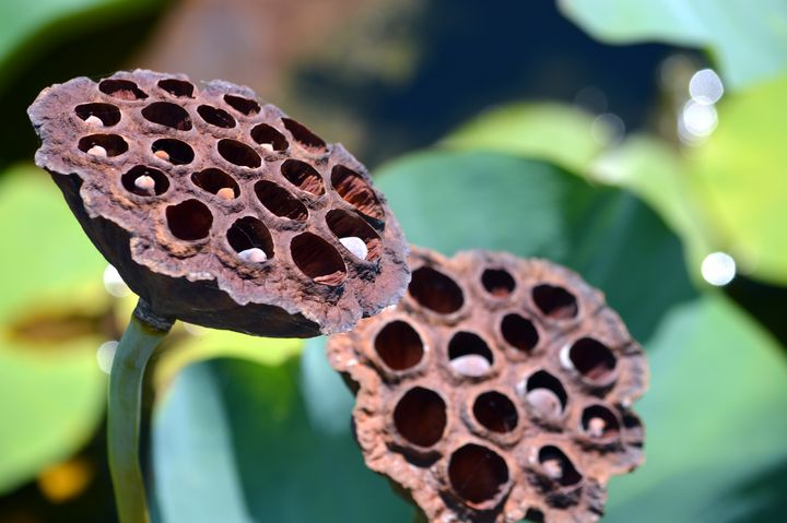 Seed Pods - Drgnfly Designs