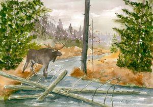 Moose at Seboeis Stream