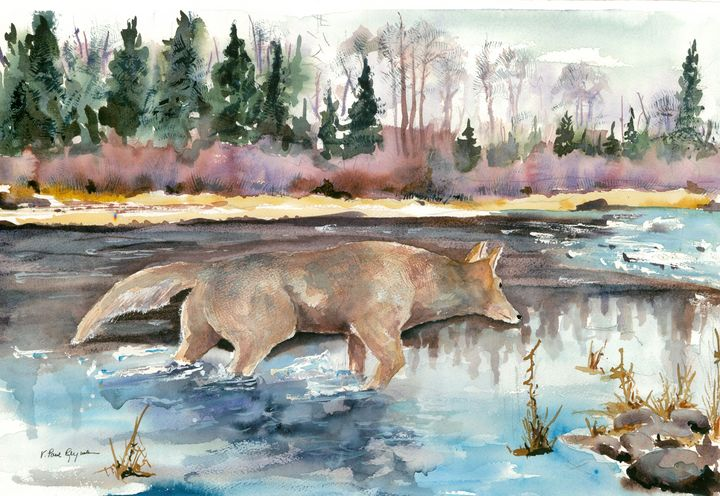 Maine Coyote - outdoor art by v. paul reynolds