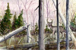The Bog Buck