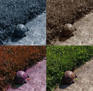 4 X Turtle