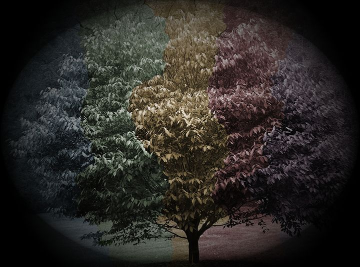 Colorful Tree - MannyBell