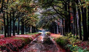 Autumn glimpse in watercolor style