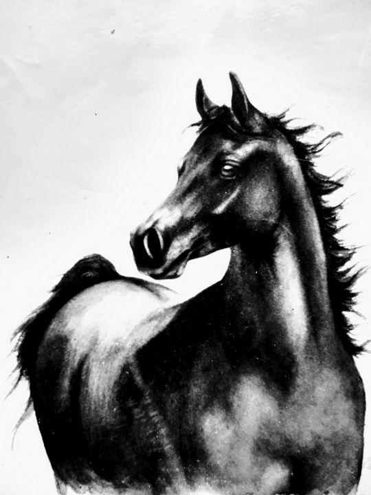 Black stallion - Mariana Redwine art collection