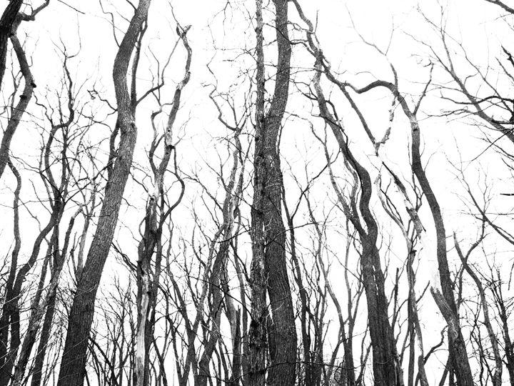 Wiggly Happy Trees - Alejandro Gomez-Pamplona