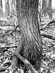 Twisted Trunk