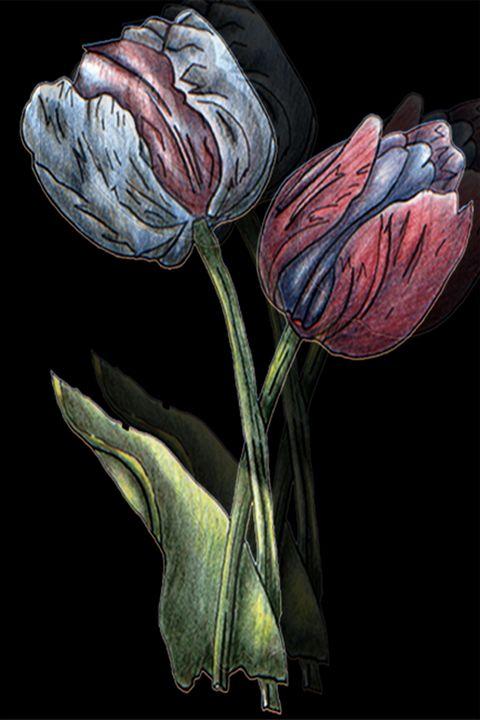 The tulips - Rocangelo