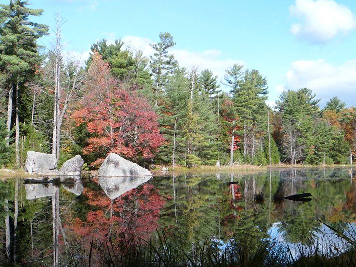 Swamp Reflection - Kezleigh