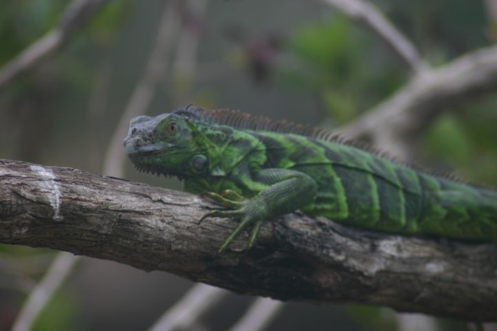 Celebration of the Lizard 2 - Armond Blackwater