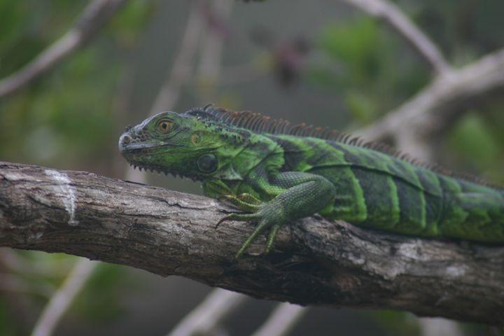 Celebration of the Lizard 4 - Armond Blackwater
