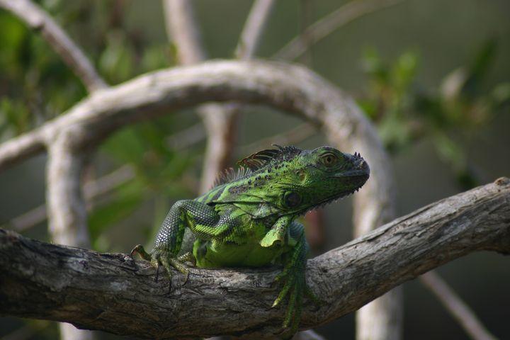 Celebration of the Lizard 8 - Armond Blackwater
