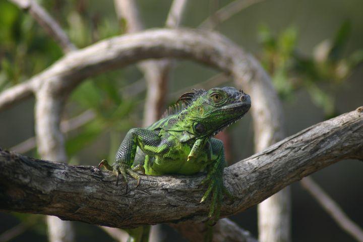 Celebration of the Lizard 7 - Armond Blackwater