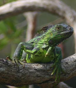 Celebration of the Lizard 6 - Armond Blackwater