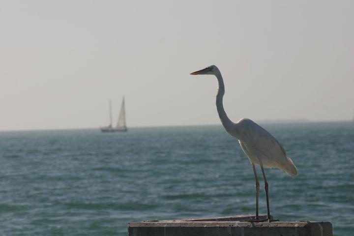 Avian Fisherman - Armond Blackwater