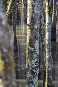 Mississippi swamps