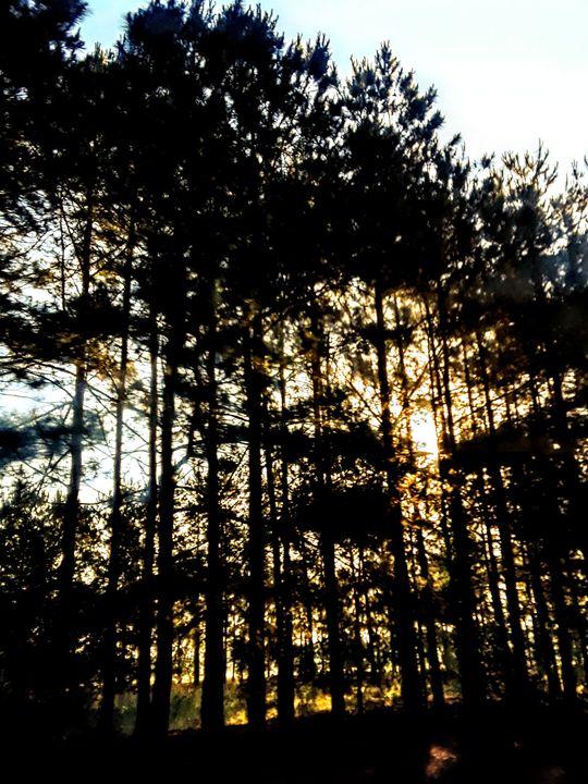 Blazing Sun beyond the trees - Dawn's Charm