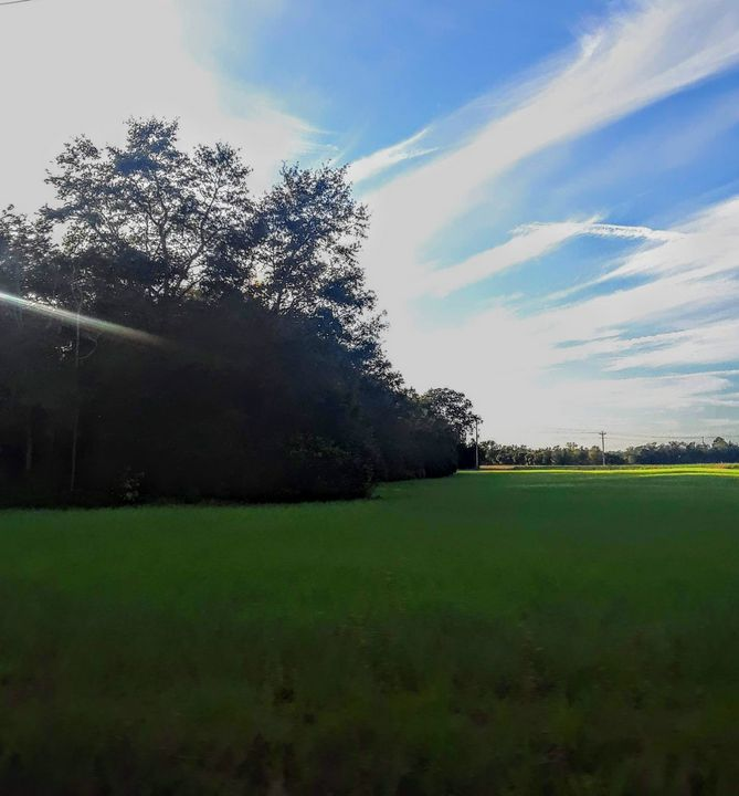 rural South Carolina - Dawn's Charm