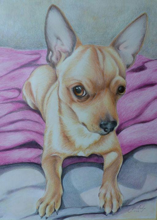 Bailey Colour pencil Chihuahua Portr - Jane Indigo