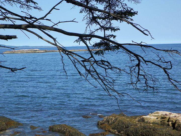 Tree Across the Sea - Corrin Broussard
