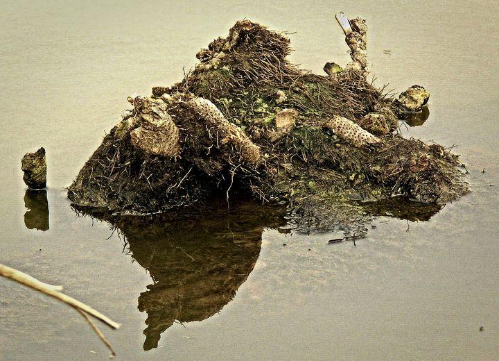 swamp 10 - Vladimir Markovsky