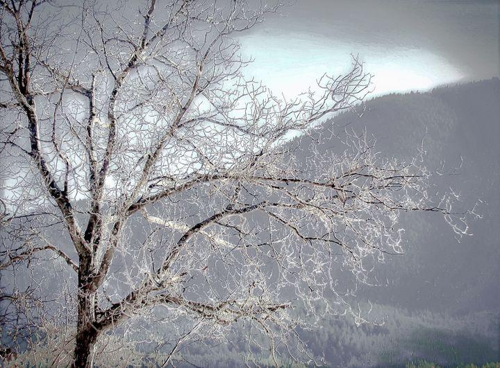 white tree - Vladimir Markovsky