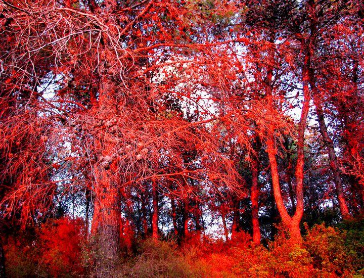 Sunset forest - Vladimir Markovsky