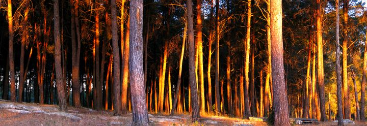 Sunset in forest - Vladimir Markovsky