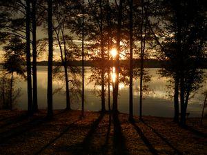 Sunset shining through the trees