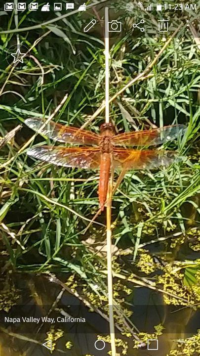 Dragonfly Still - Happyology4all & Svet's Originals