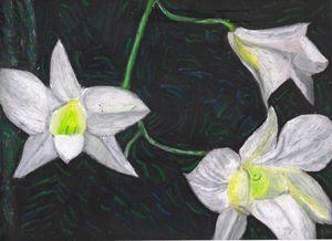 Orchids - Evanne Deatherage