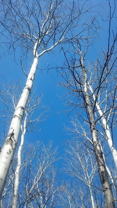 Birch Trees - Glow Art Shop