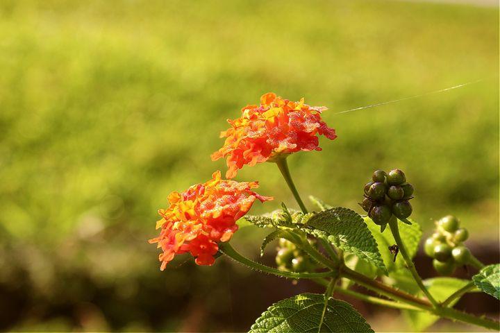Beautiful Flower ;D - yungsiang lim