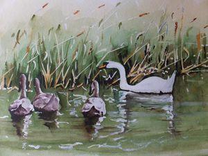 Swan Family on the Basingstoke canal