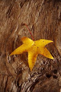 Yellow leaf on board